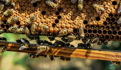 Мёд-экспертиза: как проверяют любимый продукт на ярмарках ЮЗАО