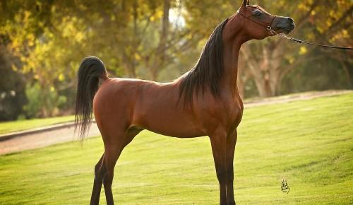 """Дирекция природных территорий """"Теплый Стан"""" и """"Тропарево"""" опубликовала занятие о редких видах лошадей"""