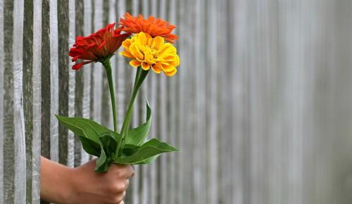 Школа №1536 приглашает к участию в акции «Дети вместо цветов»