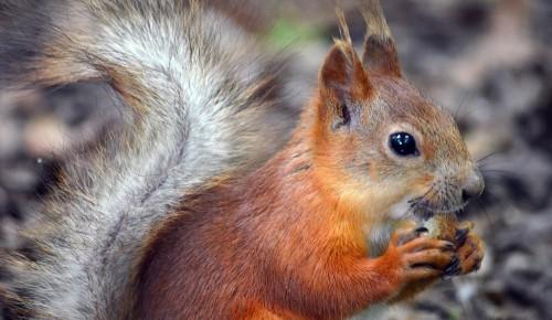 Мосприрода рассказала о подготовке обитателей природных территорий к холодам