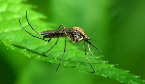 """Дирекция """"Теплый Стан"""" и """"Тропарево"""" опубликовала 10 интересных фактов о комарах"""