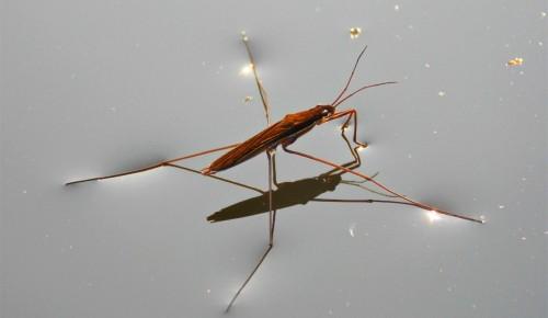 Мосприрода опубликовала новый видеоподкаст, посвященный насекомым