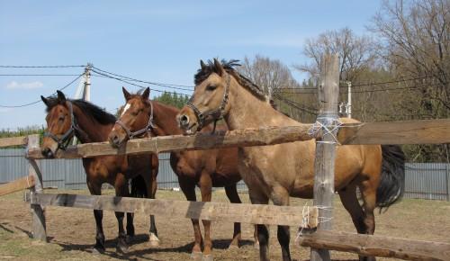 """Экоцентр """"Битцевский лес"""" рассказал о празднике покровителей лошадей Флора и Лавра"""