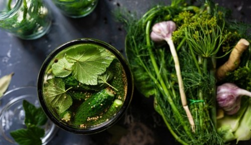Хрустящие малосольные. Садовод делится вкусными рецептами засолки и консервирования огурцов