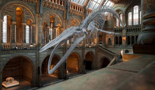 Сотрудники ТЦСО «Зюзино» советуют посетить Дарвиновский музей