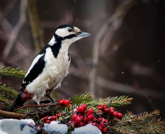Мосприрода приглашает москвичей на квест «Узнай птиц» в экоцентр «Воробьёвы горы»
