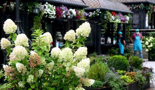 """Сады расцветают в сентябре. Корреспонденты  прогулялись по площадкам """"Цветочного джема"""""""