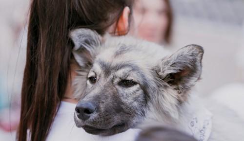 Акция «В добрые руки» объединит неравнодушных к проблеме бездомных животных — Сергунина