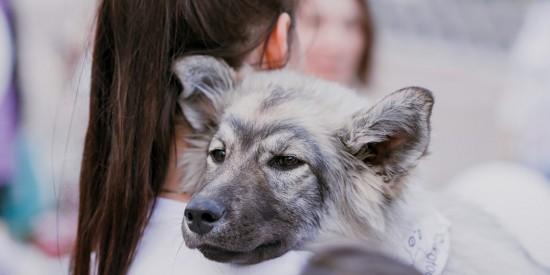 Сергунина: В Москве при участии фондов помощи животным проведут акцию «В добрые руки»
