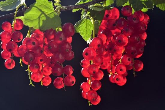 Витамины в банке. Консервируем полезные ягоды чёрной и красной смородины на зиму