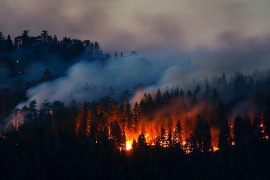 """Экоцентр """"Битцевский лес"""" 14 сентября проведет вебинар """"Пожары: мифы и реальность"""""""