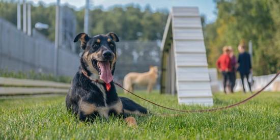 В Ясеневе появился современный мини-парк для прогулок с собаками