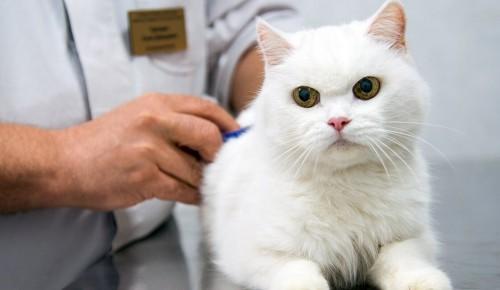 С помощью портала mos.ru можно записать животное на вакцинацию или вызвать ветеринара на дом