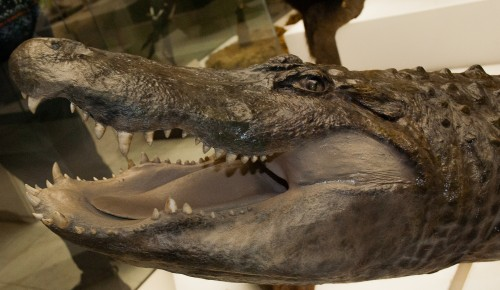 В Дарвиновский музей жители Черемушек могут попасть бесплатно сегодня