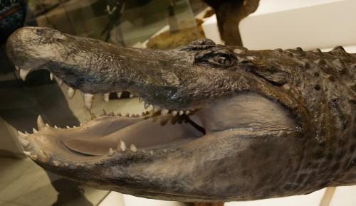 В Дарвиновский музей сегодня можно попасть бесплатно