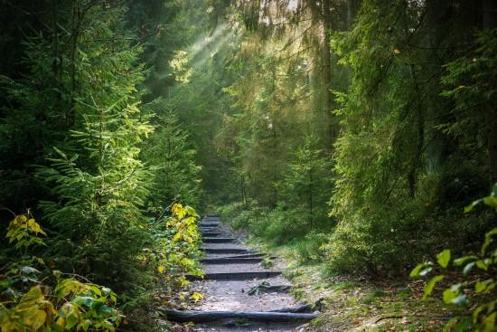 Мосприрода начинает цикл онлайн-занятий «Удивительный мир природы. Лес»