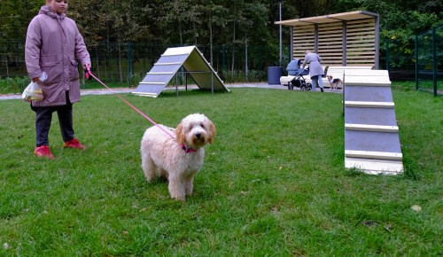 Новый мини-парк для прогулок с собаками в Ясеневе