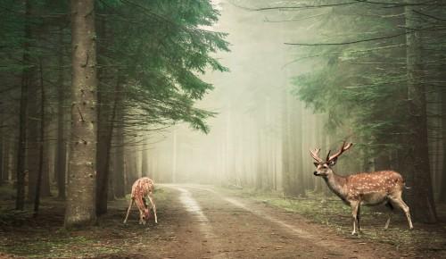 Экоцентр «Битцевский лес» опубликовал викторину в честь Дня работников леса