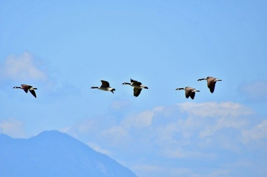Птицы Академического района устремились на юг и юго-запад