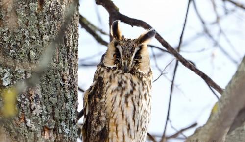 В экоцентре «Воробьёвы горы» 29 сентября и 1 октября состоится квест «Узнай птиц» и игра «Что едят птицы»