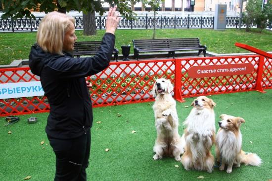 Дворянское воспитание. Кинолог советует, как научить командам взятую домой собаку