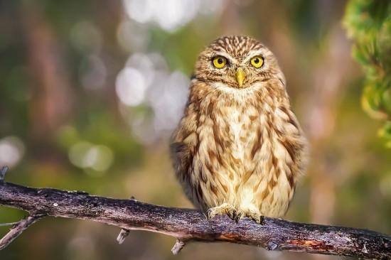 """Экоцентр """"Битцевский лес"""" 28 сентября приглашает на """"Птичий квест"""" в рамках акции """"Eurobirdwatch – 2021"""""""