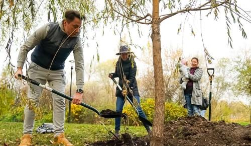Жители Академического района могут посадить дерево в честь рождения ребенка