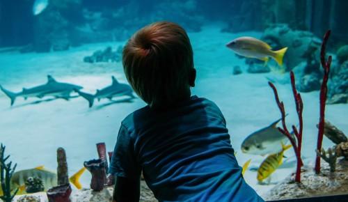 «Москвариум» представит 30 сентября программу ко Всемирному дню моря