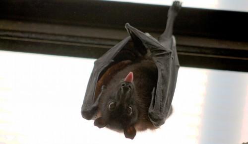 В Битцевском лесу сотрудники Мосприроды заметили летучих мышей