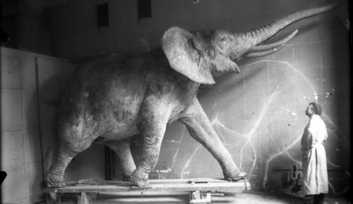 """В Дарвиновском музее откроют выставку  """"Люди музея: таксидермисты Федуловы"""
