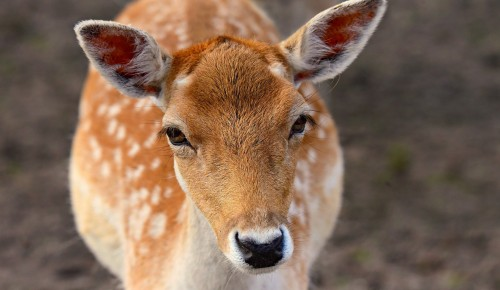 Экоцентр «Воробьёвы горы» рассказал о Всемирном дне защиты животных