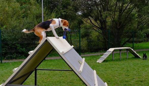 Выгул по уму. Тестируем новую собачью площадку в Ясенево и узнаем мнение собаководов