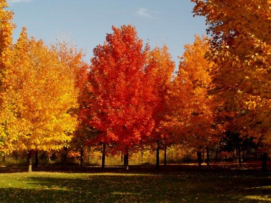 """В парке """"Усадьба Воронцово"""" стартовали работы по оздоровлению деревьев"""