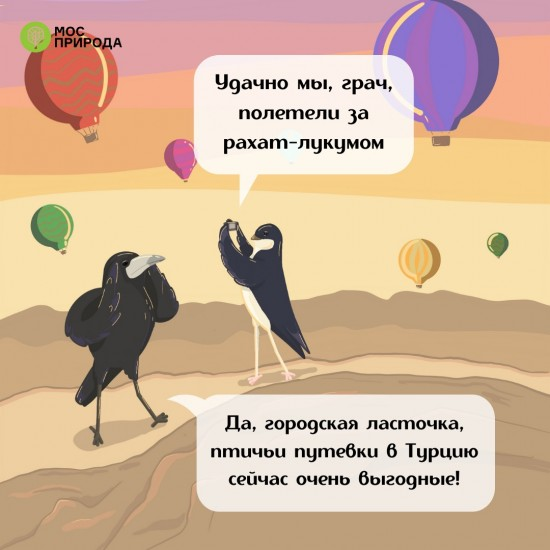 Жители Ломоносовского района могут ознакомиться с картинками Мосприроды о Всемирном дне перелётных птиц