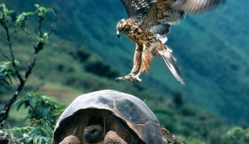 Малышам раскроют тайны растительного и животного мира на занятии Дарвиновского музея