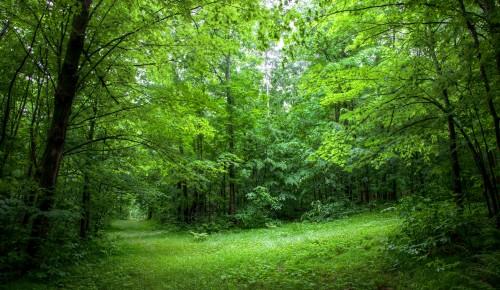 """Дирекция """"Тропарево"""" и """"Теплый Стан"""" опубликовала онлайн-занятие об экологическом образовании"""