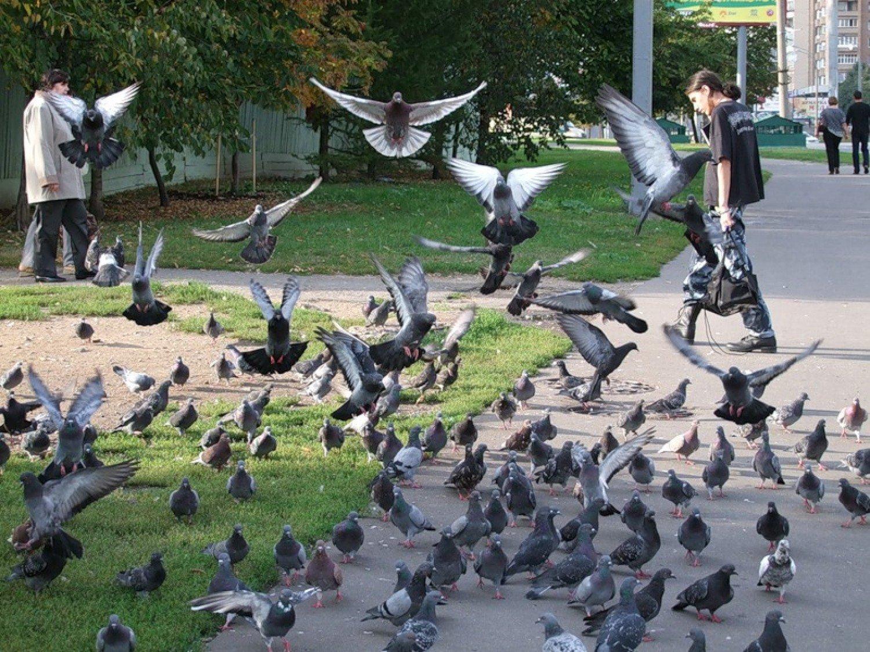 Из самодельной голубятни в ЮЗАО пропало 99 голубей